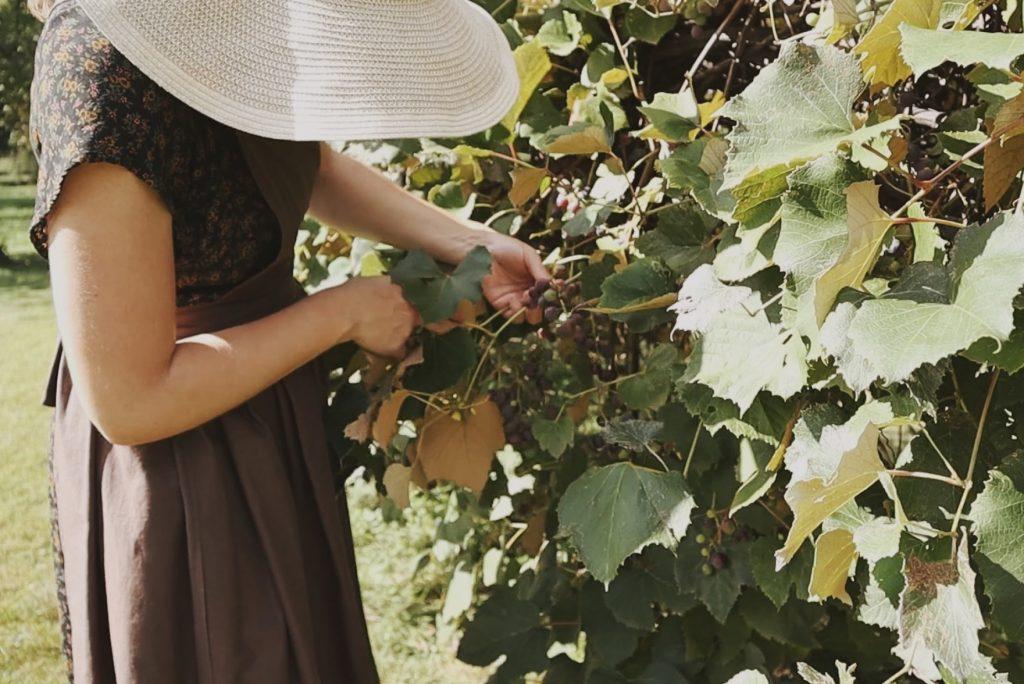 Verity Folk School woman harvesting fresh grapes wearing a sun hat and a handmade pinafore apron