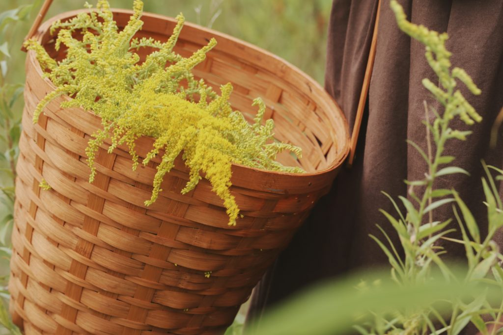 Verity Folk School Basket of Goldenrod for making Plant Dyes