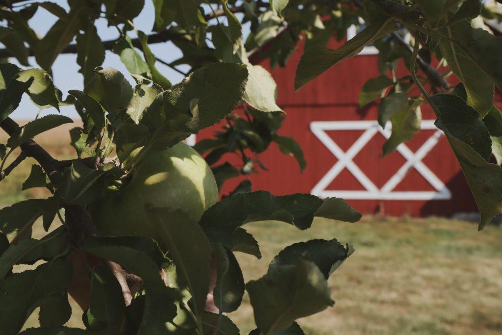 Verity Folk School Red Barn and Apple Tree